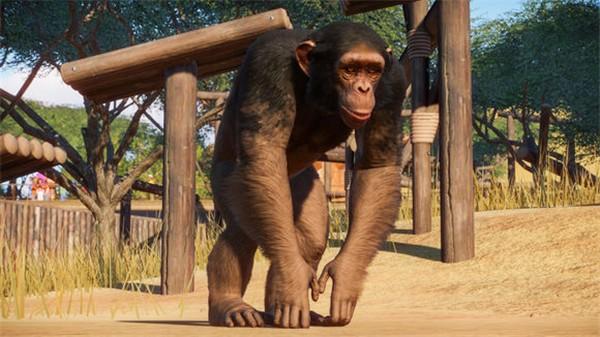 动物园之星多少钱 动物园之星发售价格一览
